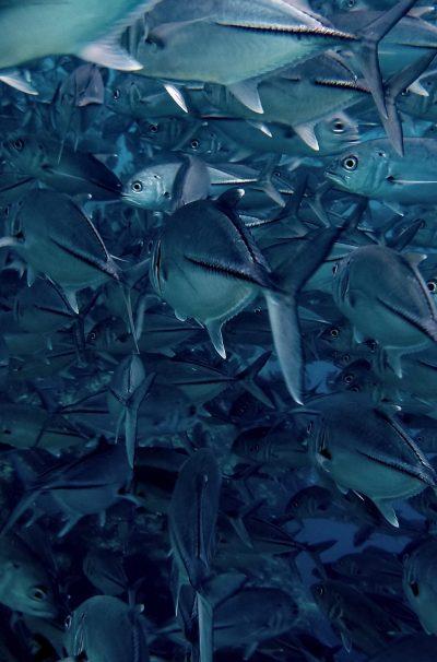 Fish, Fish, and Fish